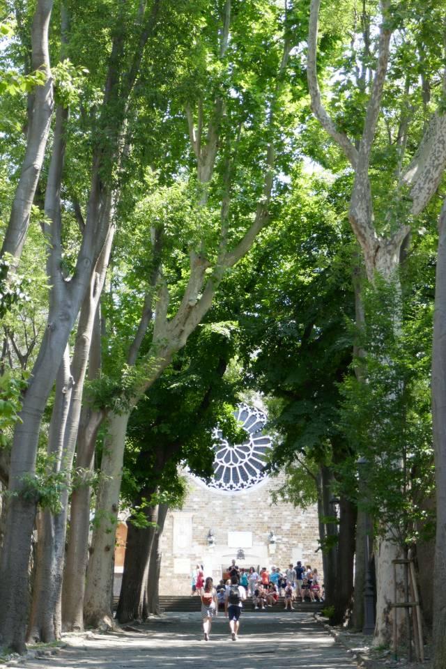 トリエステのサン・ジュスト大聖堂前の並木道